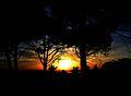 Sun and trees in Sidi bou.jpg