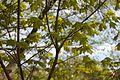 TU Delft Botanical Gardens 52.jpg