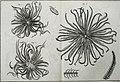 Tableau encyclopédique et méthodique des trois règnes de la nature (1791) (14581469740).jpg