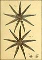Tableau encyclopédique et méthodique des trois règnes de la nature (1791) (14788031803).jpg