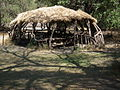 Tanzania 2239 Nevit.jpg
