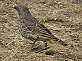Tanzania 4305 cropped Nevit.jpg