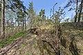 Tapiola - G5311 - hkm.HKMS000005-km0000oqw4.jpg