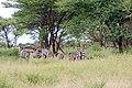 Tarangire 2012 05 27 1963 (7468503676).jpg