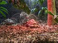 Taronga Zoo (6182461026).jpg