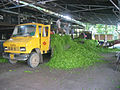 Tea Leaves Processing at 100 years old Tea Garden of Dooars 2.jpg