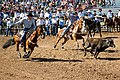 Team steer roping.jpg