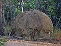 Termite Mound - Flickr - GregTheBusker.jpg