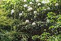The Belfast Botanic Gardens - panoramio.jpg