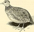 The Cambridge natural history (1895) (20328649388).jpg