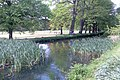 The dock feeder, Bute Park - geograph.org.uk - 431391.jpg