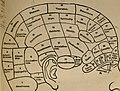 The practical phrenologist and recorder and delineator of the character and talents of (blank), as marked by (blank) - a compendium of phreno-organic science (1869) (14760631566).jpg