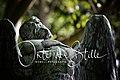 Titelbild Womeli Fotografie - Orte der Stille.jpg