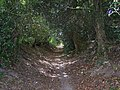 Toby's Lane - geograph.org.uk - 1296883.jpg