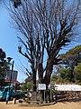 Towatari-jinja 05.jpg