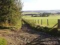Track heading down through fields - geograph.org.uk - 1519967.jpg