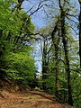 Track in woodland above the Inny - geograph.org.uk - 795010.jpg
