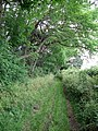 Track near Blue Gables - geograph.org.uk - 499069.jpg
