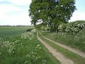 Track running west from Dunton - geograph.org.uk - 440900.jpg