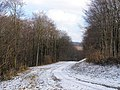 Track through Friston Forest - geograph.org.uk - 1147019.jpg