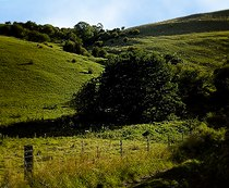 Track up Haven Hill (112355 c275629c-by-Ralph-Mills).jpg