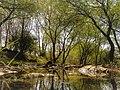 Trail 5 forest.jpg