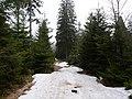 Trail near Sonnenkappe 07.jpg