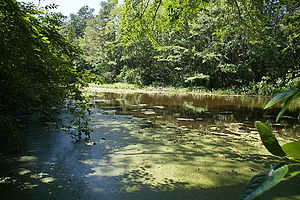 Trap Pond State Park - Image: Trap Pond State Park