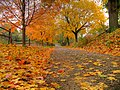 Trees, autumn leaves and pathway, New Jersey, U.S.A.jpg