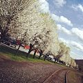 Trees along the rails - Tamaqua, Pennsylvania.jpg