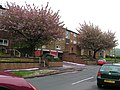 Trees in Blossom with flats behind - geograph.org.uk - 170054.jpg
