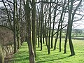 Trees on Boyne Hill. - geograph.org.uk - 125566.jpg