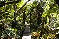 Trou de fer (21)Forêt belouve.jpg