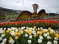 Tulip (107).JPG