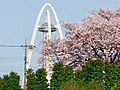Twin Arch 138 and Cherry blossoms.jpg