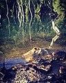 Two Creeks Track, Moore Creek, Garrigal National Park 1.jpg