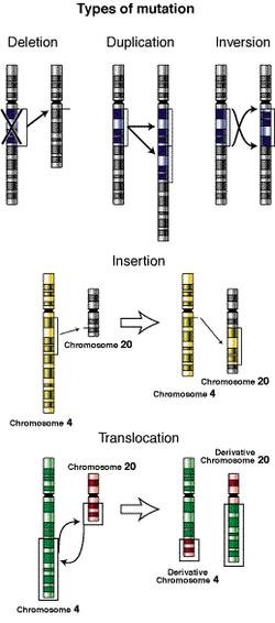 Biologia Para Todos Cambios En La Estructura De Los Cromosomas