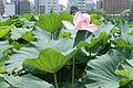 Ueno Park - August 2013 - Sarah Stierch - 05.jpg