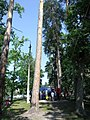 Ukraine. August 2012. Forest Vodice. - panoramio (5).jpg