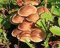 Unid. fungi - Flickr - S. Rae.jpg