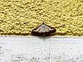 Unidentified-butterfly-20190610-145356.jpg