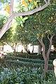 Valencia, La Lonja, zahrad.jpg