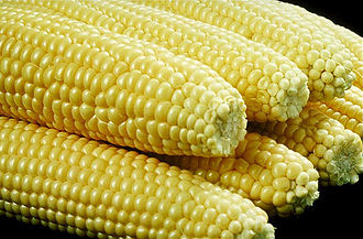 Corn kernel - Kernels on the cob