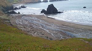 Velella - Velella (By-the-wind sailors) stranded on Rodeo Beach, Marin County, California.
