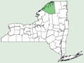 Veronica grandis NY-dist-map.png