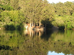 View across Lake Anza, Tilden Park, Berkeley, California 4.JPG