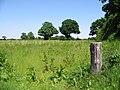 View across field near Sheriff's Wood - geograph.org.uk - 850355.jpg