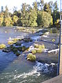 View from Pedestrian Bridge, University of Oregon.jpg