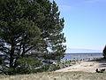 View to Gulf of Riga - panoramio.jpg