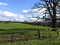 View towards Launde Park Wood - geograph.org.uk - 352350.jpg